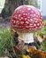 Stock Image : Toadstool Red with white mushroom