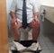 Stock Image : Toilet Problem