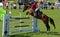 Stock Image :  Toon het Springen Paard en Ruiter