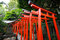 Stock Image : Torii tunnel