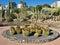 Stock Image : Town Centre Cactus Garden Spain