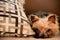 Stock Image : Toy dog