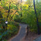Stock Image : Trail in Central Park in Fall