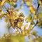 Stock Image :  Transeúnte P del pájaro del gorrión primer detallado del domesticus, árbol del otoño
