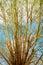 Stock Image : Tree