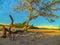 Stock Image : Tree on the beach