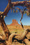 Stock Image : Tree framed Monument Valley