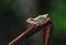 Stock Image : Tree frog
