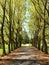 Stock Image : Tree lined walkway