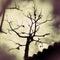 Stock Image : Tree Silhouette