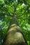 Stock Image : Tree trunk