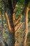 Stock Image : Tree trunk under sunset light