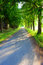 Stock Image : Trees alley