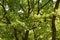 Stock Image : Trees