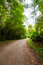 Stock Image : Trees Path