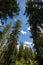 Stock Image : Trees on Pyramid Lake