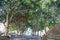 Stock Image : Trees in Santa Cruz