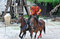 Stock Image : Trick riding,the Legend of Provins