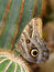 Stock Image : Tropical butterfly on cactus