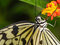 Stock Image : Tropical butterfly on plant