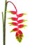 Stock Image : Tropical Flower Heliconia, isolated on white