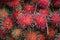 Stock Image : Tropical Fruit - Rambutan