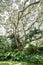 Stock Image : Tropical Plants