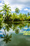 Stock Image : Tropical pond is surrounded by lush vegetation