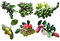 Stock Image : Tropical Spice Set