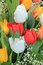 Stock Image : Tulips bouquet