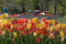 Stock Image : Tulips in the Park