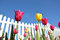 Stock Image : Tulips With a white Fence