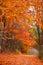 Stock Image : Tunnel of autumn trees