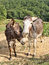 Stock Image : Two beautiful donkey friends, close together