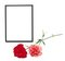 Stock Image : Two carnations and black photo frame