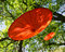 Stock Image : Two red umbrellas in tree
