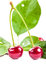 Stock Image : Two ripe cherries with leaves