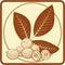 Stock Image : Unripe walnuts label