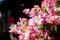 Stock Image :  Valse bloemen