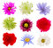 Stock Image : Various colorful Flowers