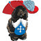 Stock Image : Vector funny cartoon Portuguese Water Dog musketeer