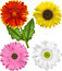 Stock Image : Vector Illustrations of the Sunflower Family.