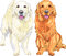 Stock Image : Vector two dog breed Golden Retriever