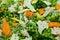 Stock Image : Vegetable