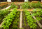 Stock Image : Vegetables
