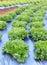 Stock Image : Vegetables hydroponics farm
