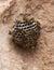 Stock Image :  Vespas na praia Colmeia da vespa do close-up no fundo de pedra 2