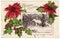 Stock Image : Vintage Christmas Greeting Postcard Poinsettias
