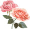 Stock Image : Vintage Roses illustration