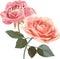Stock Image : Vintage Roses illustration